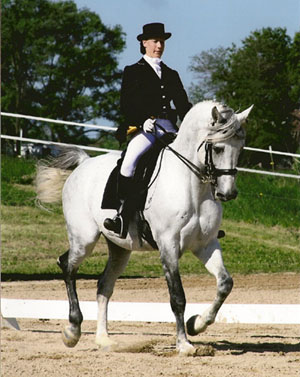 Hungarian WarmBloods Stallion Bartok