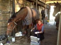 Wendely Wesselink DVM MRCVS - Yorkshire Equine Practice
