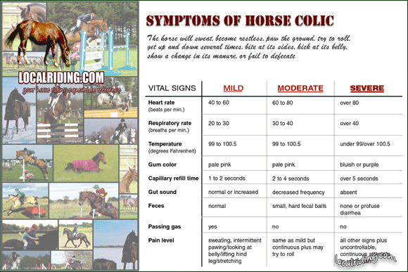 The symptoms of horse colic - click to download PDF