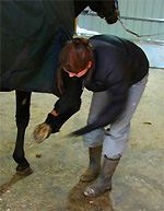 Farrier training - picking out horse feet
