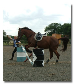 Groundwork Basics - first train your horse on the ground